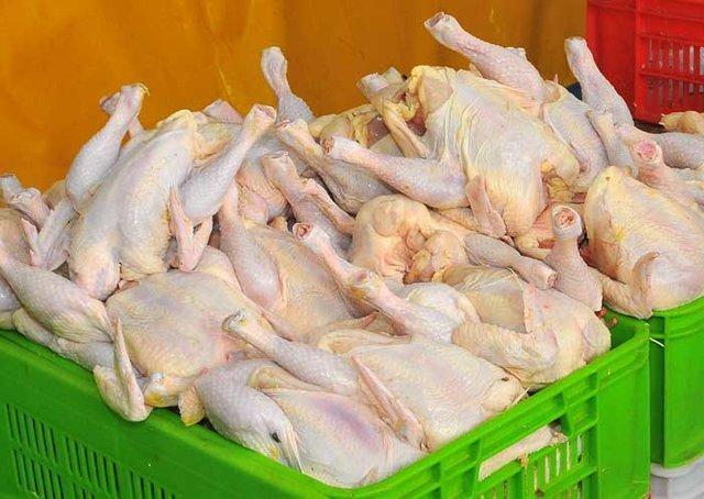 مرغ های درشت نخرید