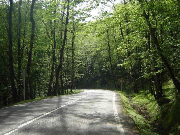 دالخانی یا دالان بهشت؟! پیشنهاد یک جنگل نوردی رویایی