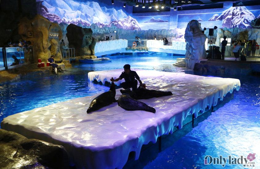برای بازدید حیوانات قطبی نیز به کشور چین سفر نمایید