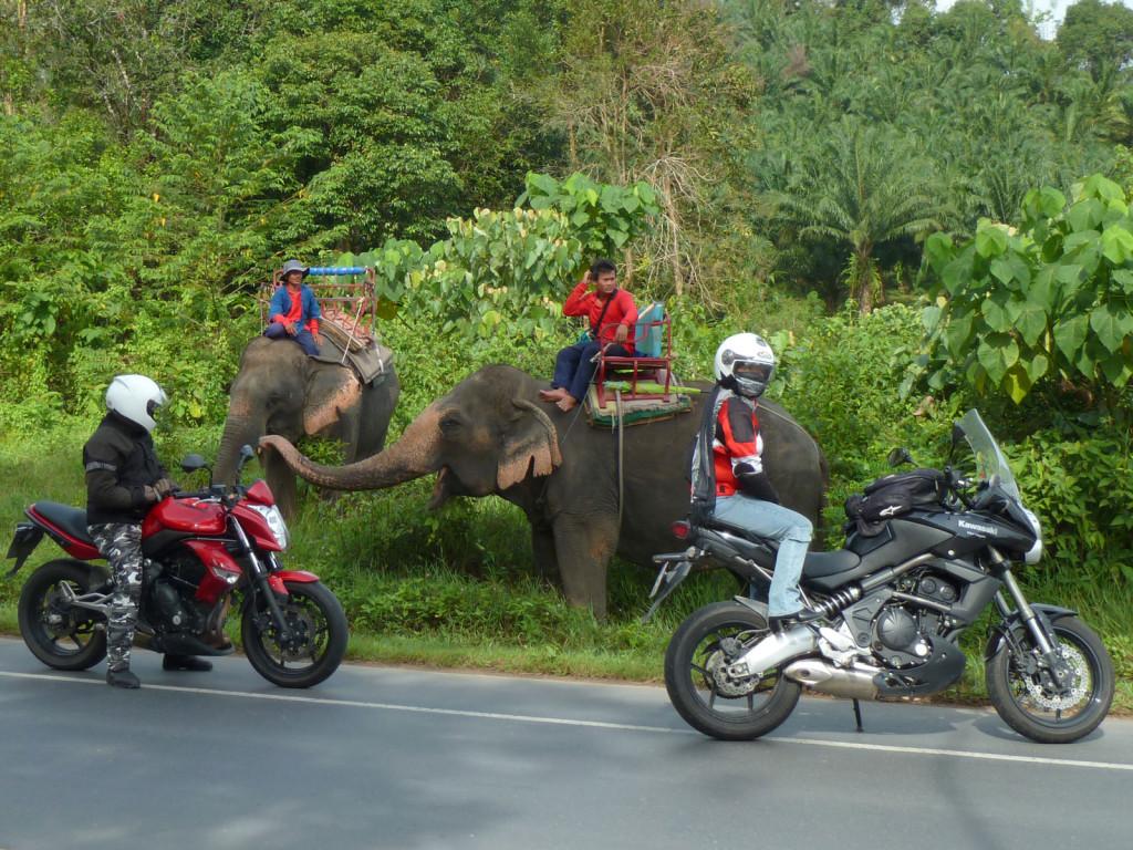 راهنمای کرایه موتور در تایلند